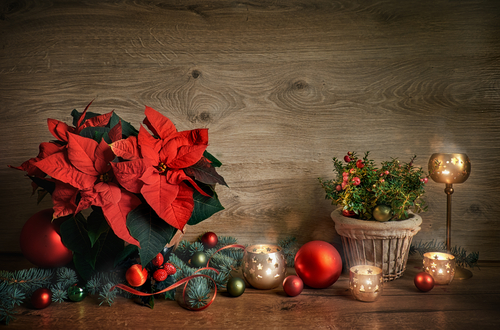 Poisonous Holiday Plants